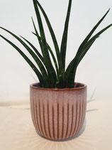 Pot porselein lila, large + plant