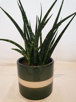 Pot porselein groen medium + plant
