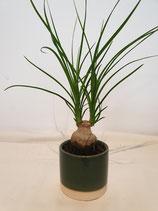 Pot porselein groen small + plant