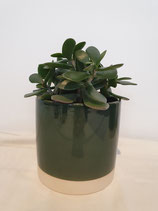 Pot porselein groen large + plant