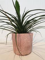 Aarden pot roze + plant