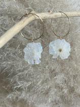 Stardust-Flower Kreole