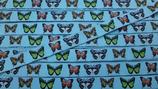 Schmetterlinge Butterflies blau türkis Webband
