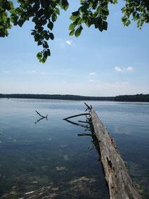 Stechlin See Brandenburg Urlaub Ferien Hausboot