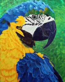 Parrot 40x50
