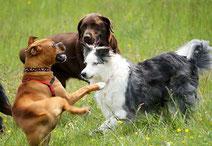 Troubles de la personnalité du chien