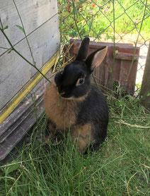 Einfache Tierkommunikation mit Kaninchen
