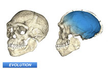Homo sapiens Dates Pushed Back, Pan-African Emergence Established