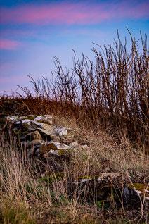 Plouguerneau muret en pierre sèche coucher de soleil