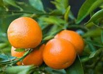 Venta de mandarinas online, venta de mandarinas por internet