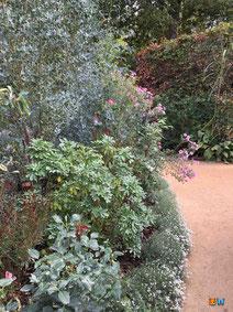 """Une bonne couverture de sol pour avoir un beau jardin à l'instar d'""""Elixir floral"""" du festival international des jardins de Chaumont sur Loire 2019"""