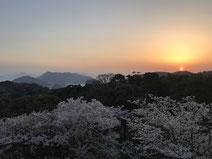 福山市 グリーンライン後山公園からの桜と夕日と仙酔島