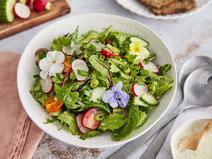 Geprüfte IN FORM-Rezepte, IN FORM, DGE, vegetarisch, vegetarisch kochen, vegetarisch essen, vegetarisches Essen, vegetarisches Rezept, vegetarische Küche, gesunde Ernährung, Ernährung, Gesundheit, Frühlingssalat, Salat, Salatrezept, vegetarischer Salat