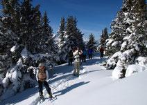 Schneeschuhwandern im Winter-Märchenwald