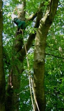 Professionelle Baumpflege