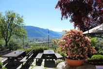 Glögglkeller Lana Südtirol Cantina Glögglkeller Alto Adige Törggelen Osteria