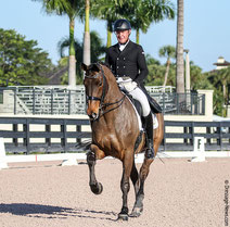 Michael Klimke riding Harmony's Scout S in a national Int. II for the debut of the 10-year-old stallion to complete the German rider's most successful Global Dressage Festival show beginning his fifth year of Florida competitions.