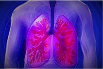 Naturheilpraxis Ralf Drevermann Hamm - Krankheit: Asthma bronchiale - Bronchien