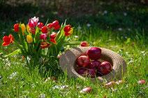 原材料のりんご