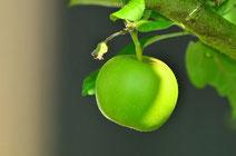 青りんご風味と言われるグレングラント