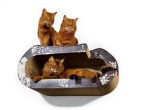 Katzenmöbel für die Wand