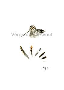 R13 Head & Feathers bécassine