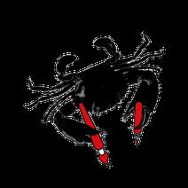 graphiste à Brest studio communication visuelle finistère illustrateur bretagne dessinateur artiste Plougastel-Daoulas agence packaging publicité sur lieu de vente PLV 29