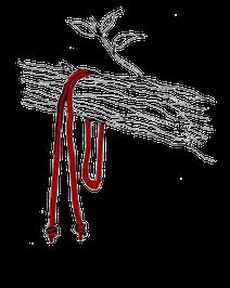 木の枝にロープを回す
