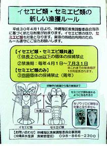 イセエビ類・セミエビ類の新しい漁獲ルールをPRするパンフレット