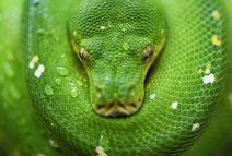 conte sur l'eczéma : le serpent