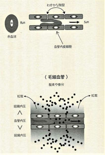 毛細血管の運搬法