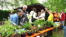 Beim Pflanzenflohmarkt trafen sich viele Hobbygärtner