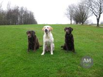 Cookie, Krümel und Toni