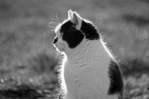 17 Katze im Sonnenschein/Cat with a ray of sunlight