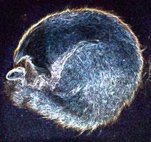10 Leuchtender Kater/Luminous tomcat