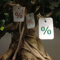 Ficus retusa, Chinesische Feige, Zimmerbonsai mit Luftwurzeln