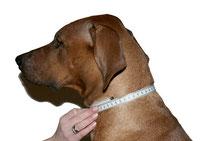 Auf unserer Abbildung beträgt der Halsumfang 46cm.