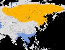 Karte zur Verbreitung des Gelbbrauen-Laubsängers (Phylloscopus inornatus)