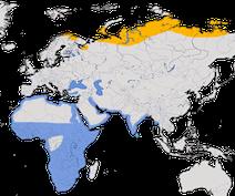 Karte zur Verbreitung des Zwergstrandläufers (Calidris minuta)