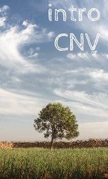 olivier au maroc - inititation, introduction à la CNV