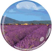 Lavendelfeld mit ALC Prima Premier