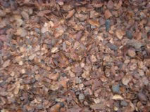 coque de cacao