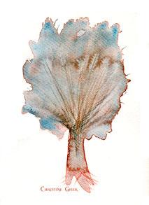 Birke, Lebensbaum, Baum des Lebens, keltischer Jahreskreis, Baumkreis, keltischer Baumkreis