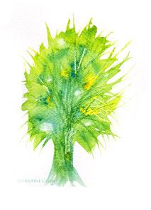 Silberweide, Weide, Lebensbaum, Baum des Lebens, keltischer Jahreskreis, Baumkreis, keltischer Baumkreis