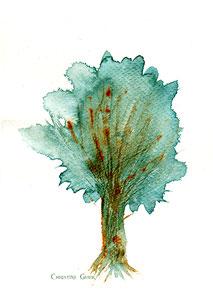 Esche, Lebensbaum, Baum des Lebens, keltischer Jahreskreis, Baumkreis, keltischer Baumkreis