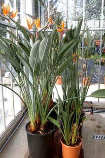 Plantes méditerranéennes commande en ligne