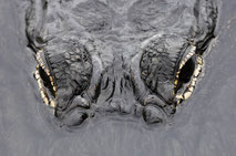 Tierfotografie, Reptilien / Wildlife photography of reptiles