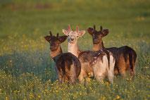 Tierfotografie. Wildlife Photography