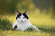 Tierfotografie / Animal photography