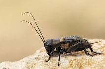 Makrofotografie von Insekten /  Macro photography of insects